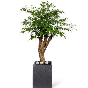 해피트리-행복나무 고급VIP