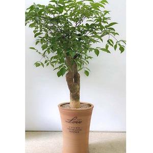 행복나무-大목