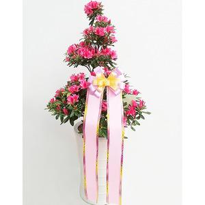 철쭉(봄의계절)