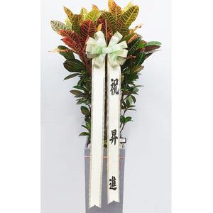 잎크로톤-공기정화식물